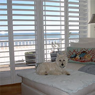 Dog Next to Shutters